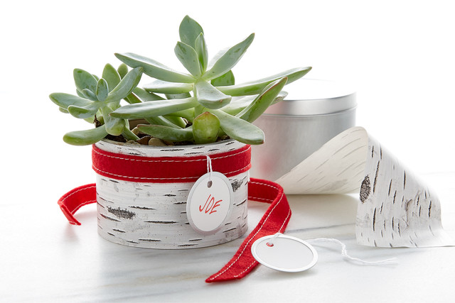 Christmas Succulent Gift.Easy Diy Homemade Holiday Gifts Container Stories